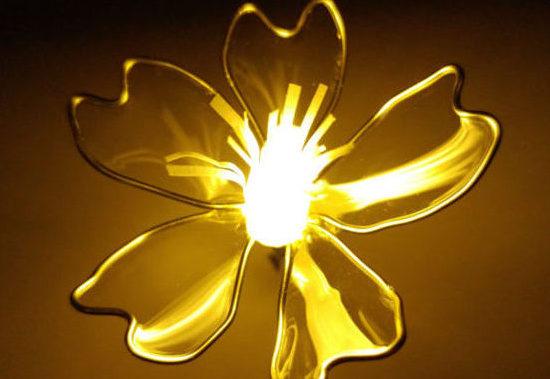 光る桜の花の写真